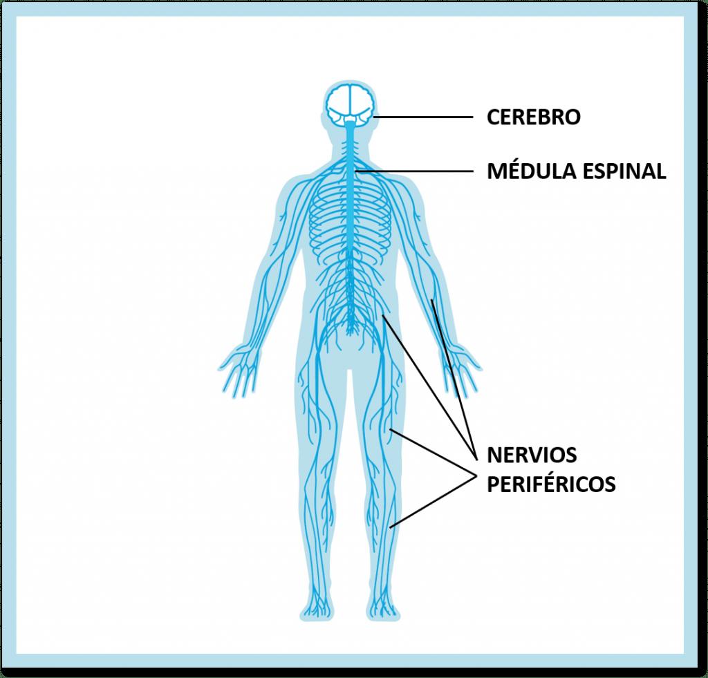 quiropractico